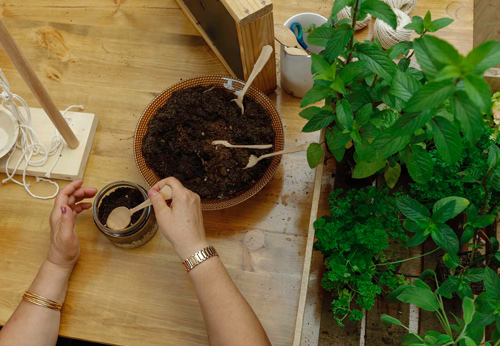 """Creative DIY Planting"" workshops for adults"