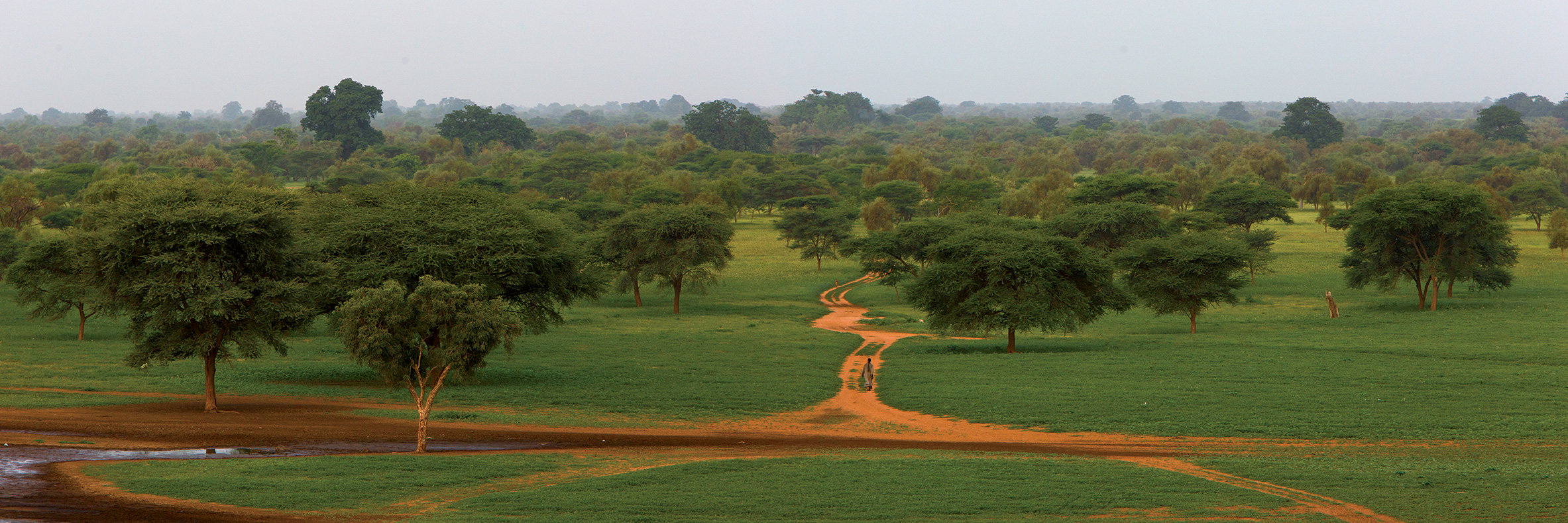 great green wall panorama