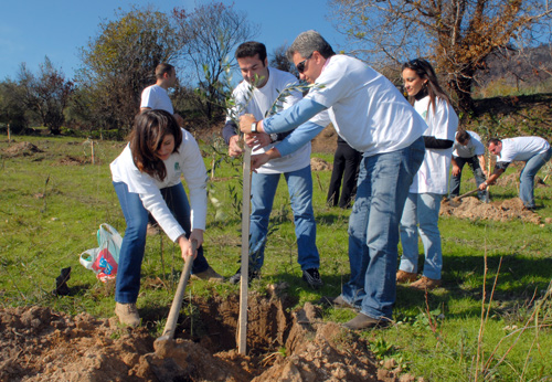 Greece: 10,000 olive trees planted